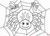 Coloring Spider sketch template