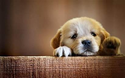 Puppy Dogs Fanpop Dog Puppies 1440 Pet