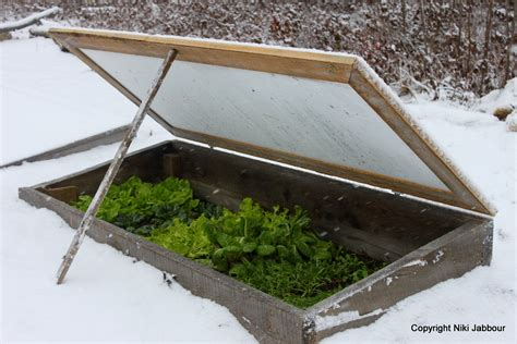 cold frames for gardening how to grow vegetables all year even in winter