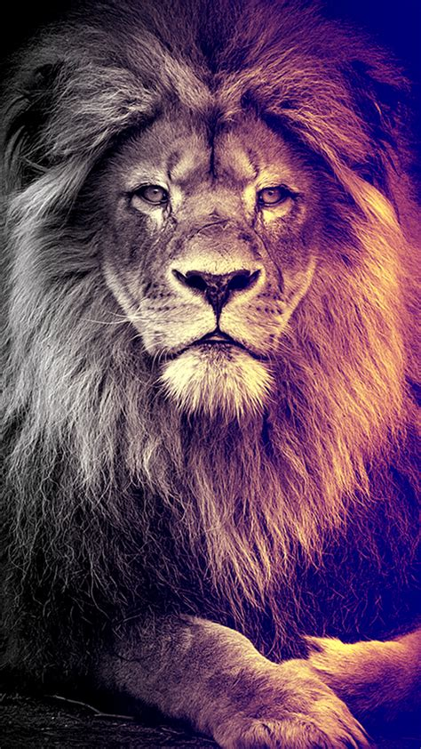 lion    wallpapers  lion