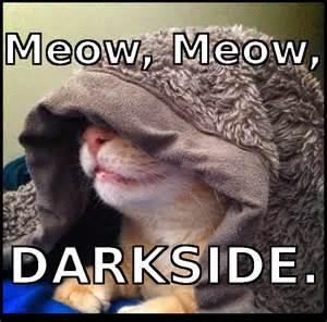 Meow Funny Cat Meme