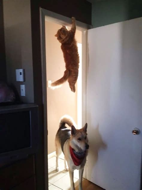 cats  immediately regretted  poor life choices