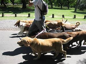filedog walker buenos airesjpg wikipedia With be a dog sitter