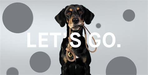 dog  veterinarians estimate dog age