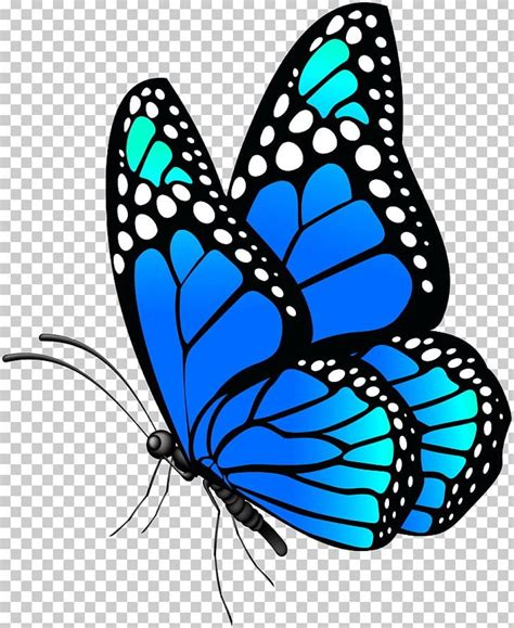 butterfly clipart coloring pages    printable design themes