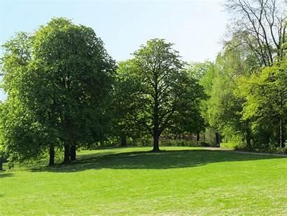 Park Trees Spring Shrubs Air Fresh Tree