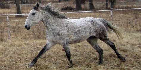 pferde fuer allergiker allergiede