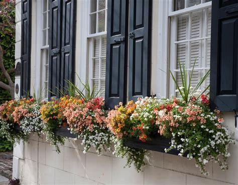 Blumenkästen Bepflanzen Ideen wie bepflanze ich meine balkonk 228 sten richtig 19 ideen und