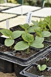 Planter Ail Rose : comment fabriquer une serre moins de 10 euros d d dans son jardin fabriquer une serre de ~ Nature-et-papiers.com Idées de Décoration