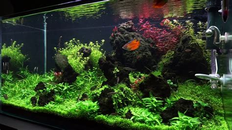 How To Make Aquascape by How To Create An Aquascape Iwagumi Layout
