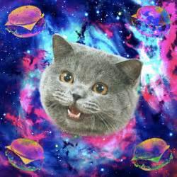 galaxy cat galaxy cat quotes quotesgram