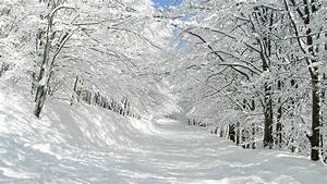 Nature landscapes winter snow trees forest white roads ...