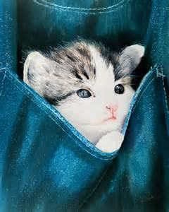 cat pocket cat in pocket by paul cubeta