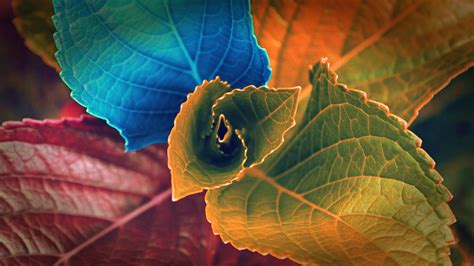 Colors Of Leaves Wallpapers