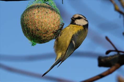 ateliers fabrication boules de graisse et mangeoire 224 oiseaux le du service municipal