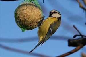 Graines De Tournesol Pour Oiseaux : nichoir nichoirs mangeoire oiseau 44 lign scael ~ Dailycaller-alerts.com Idées de Décoration