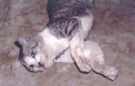 cat with rabies i m afraid my cat might had rabies help cat