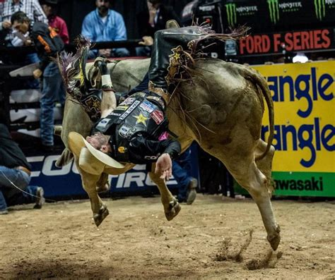 rodeo issue   bulls  pbr treated entertainment