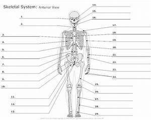 Label Skeleton Diagram Worksheet