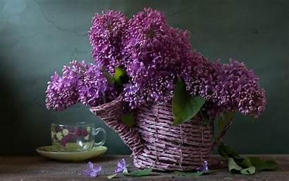 Lilac Shower Wallpapers Desktop