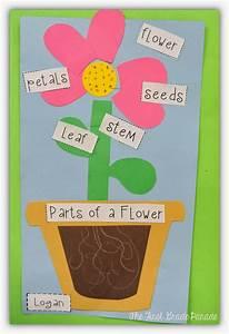 The First Grade Parade  Plants Aplenty