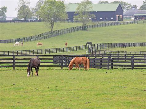 kentucky lexington horses horse things pastures park attraction graze tripstodiscover premier