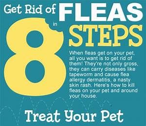 Getting rid of fleas in carpet meze blog for How to kill fleas on wood floors