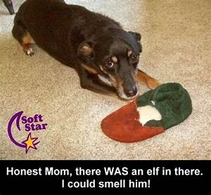 funny pictures: Funny Dogs Pictures With Captions