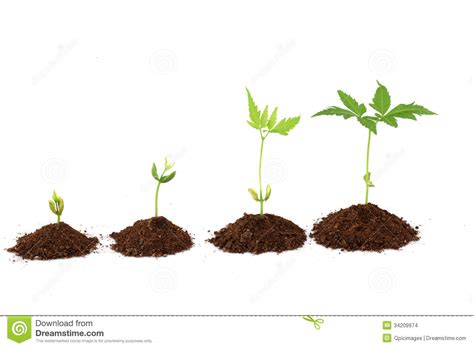 Plant Growth Stages  Plant Progress Stock Photo  Image Of Heart, Close 34209974