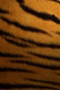 Texture Tigre - Texture Pattern