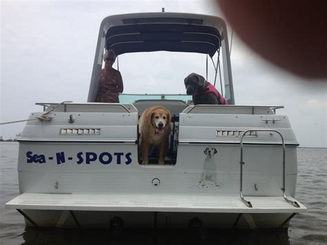 Boat Carpet Cleaning Service by Boat Carpet Cleaning On Site Spot S Carpet Cleaning