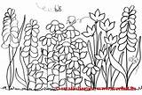 Coloring Garden Pages Flowers Flower Colouring Gardens Secret Spring Adult Template Printable Adults Theme Scene Pattern Therapy Colorful Landscape Flowerbed sketch template