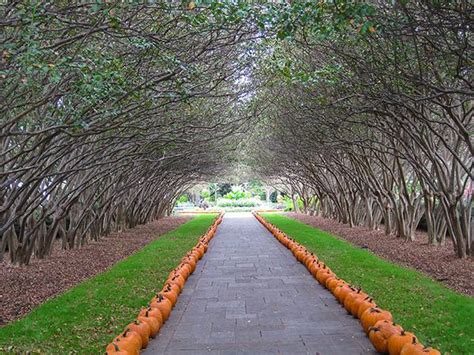 botanical gardens dallas dallas arboretum and botanical garden the cultural