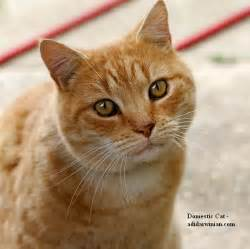 how much to board a cat domestic cat beautiful