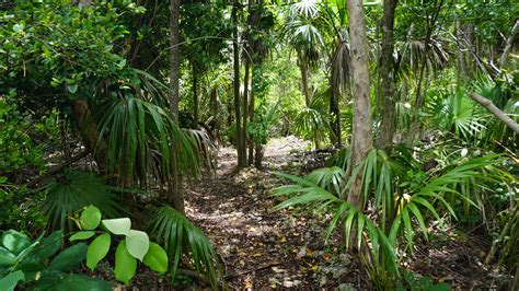 Hammock Trails by Curry Hammock Nature Trail Florida Hikes