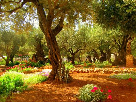 Garden Of Gethsemane Bible by Garden Of Gethsemane Spectacular But For Us The