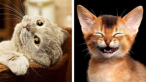 dangerous cat breeds awww