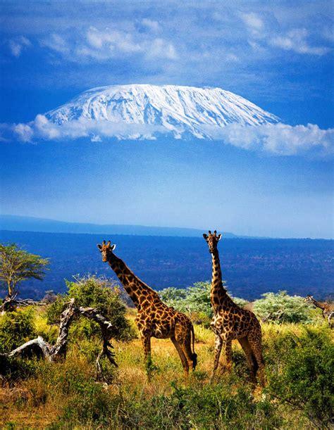 im 225 genes de paisajes y animales hermosos