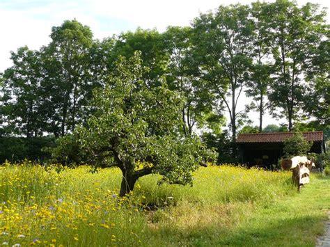 welke fruitboom in de tuin 25 beste idee 235 n fruitboom tuin op