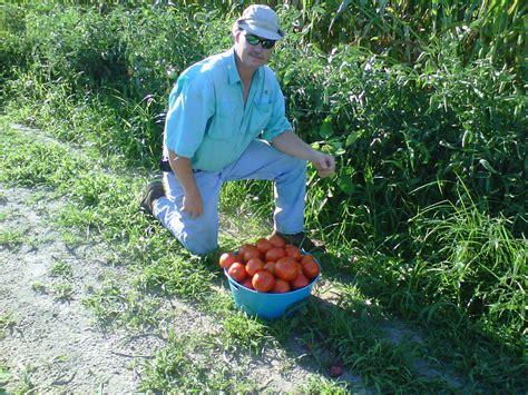 tomato hoss tools
