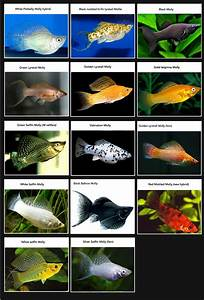 25+ best ideas about Freshwater fish tank on Pinterest ...