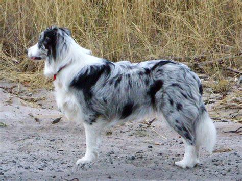 dog breeds  start   pets world