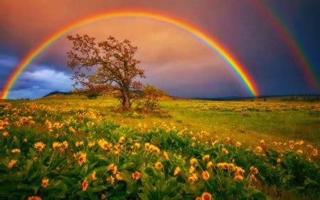 rainbow rainbows nature background wallpapers