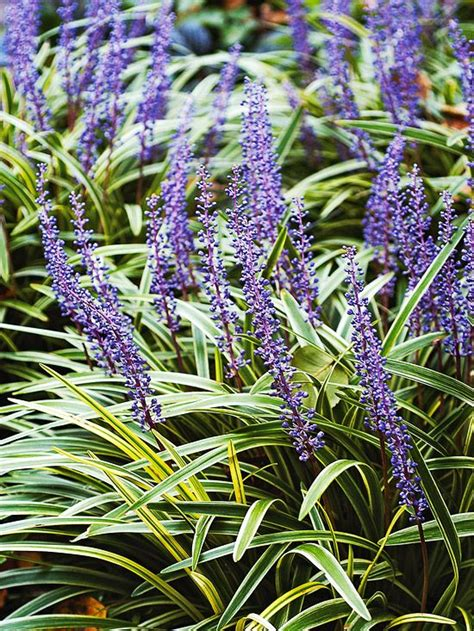 best perennials for shade the best perennials for shade shades white flowers and spikes