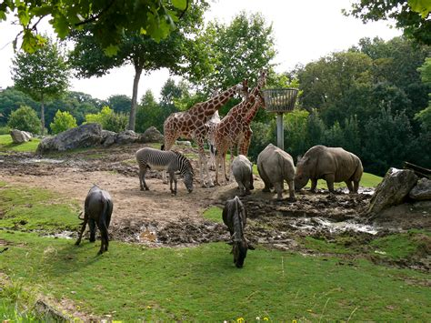 zoo zoos beauval animals france parc europe savanna types being open popular zooparc uncategorized importance leave