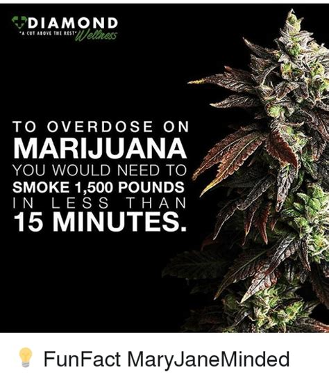 Marijuana Overdose Meme - diamond a cut above the rest to overdose on marijuana you would need to smoke 1500 pounds i n l