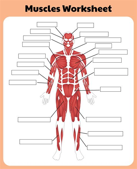 Human body muscle system diagram with detailed labels sep 02, 2019we are pleased to provide you with the picture named human body there are anterior muscles diagrams and posterior muscles diagrams. 10 Best Printable Worksheets Muscle Anatomy - printablee.com