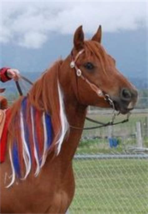 foto de red white and blue horses Two Horse Tack Blog