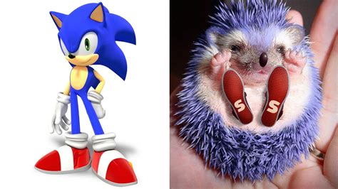 Sonic The Hedgehog In Real Life All Characters Youtube