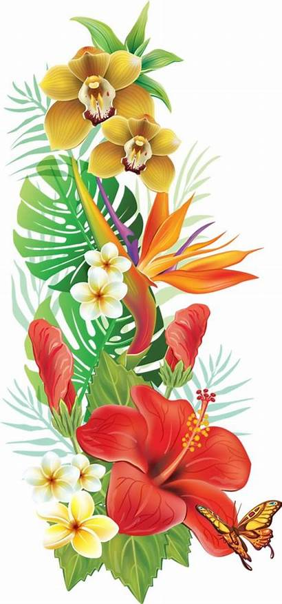 Flower Flowers Clipart Tropical Hawaiian Exotic Moana